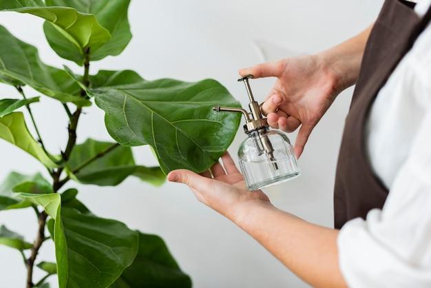 Trabalhador de pequena empresa borrifando plantas com spray de água