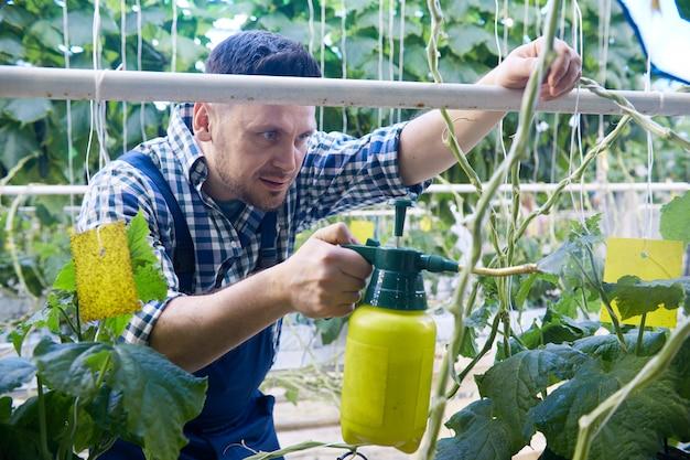 Trabalhador de tratamento de plantas em estufa
