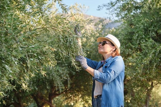 Trabalhador de uma fazenda de oliveiras, jardim de oliveira de fundo nas montanhas
