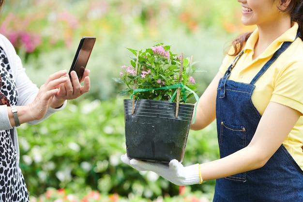 Trabalhador do centro de jardinagem mostrando a planta em flor ao cliente que a está fotografando no smartphone