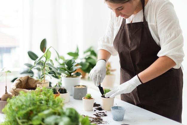 Trabalhador profissional em viveiro de plantas repotting uma planta