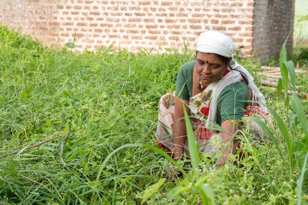 Trabalhadoras cortando grama indesejada do jardim