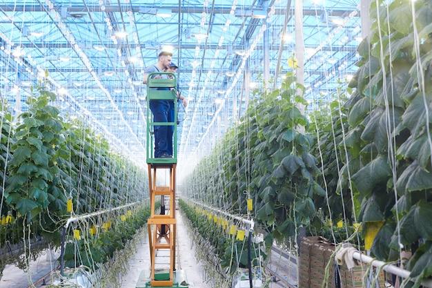 Trabalhadores agrícolas inspecionando plantas na estufa