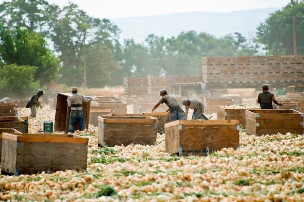 Trabalhadores, colher, cebolas