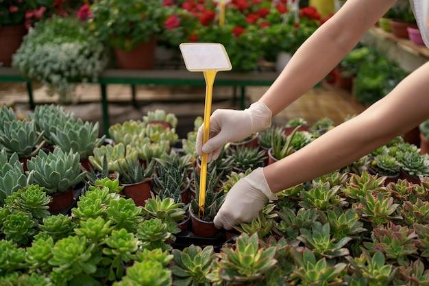 Trabalhadores monitoram o crescimento e o desenvolvimento de suculentas em casa de vegetação
