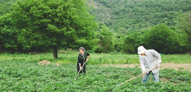 Trabalhadores plantando legumes na fazenda com equipamentos.