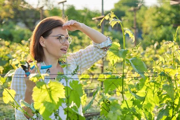 Trabalho de jardim primavera verão em vinhedo