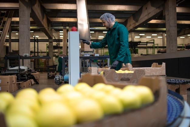Trabalho em fábrica de alimentos orgânicos, separando maçãs verdes e transportando por correia transportadora para o frigorífico.