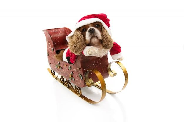 Traje engraçado do cão de papai noel dentro de um trenó nas férias de natal