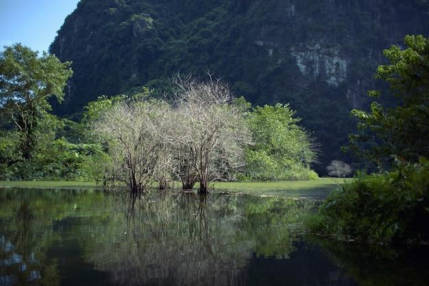 Trang uma paisagem com água, árvores e montanhas de calcário. vietnã