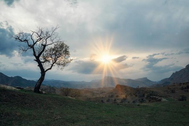 Tranquila e pacífica vista panorâmica da bela árvore verde grande ao pôr do sol, crescendo sozinha no campo de primavera em um penhasco.