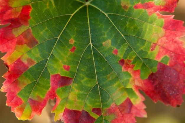 Transformação de cor de uma folha, verde para vermelho