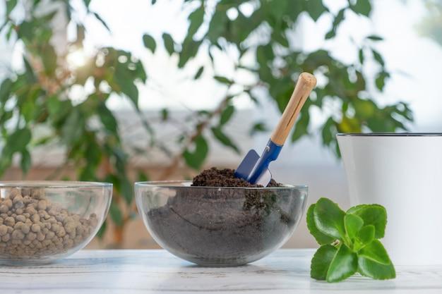 Transplante de plantas em outro pote em casa. ferramentas de jardinagem em casa.