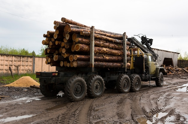 Transporte de madeira em um caminhão. caminhão industrial para transporte de madeira. recursos naturais renováveis. máquina de madeira. exportação de madeira e conceito de transporte. . foto de alta qualidade