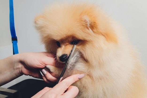 Tratador profissional aparando patas de cachorro long-haried