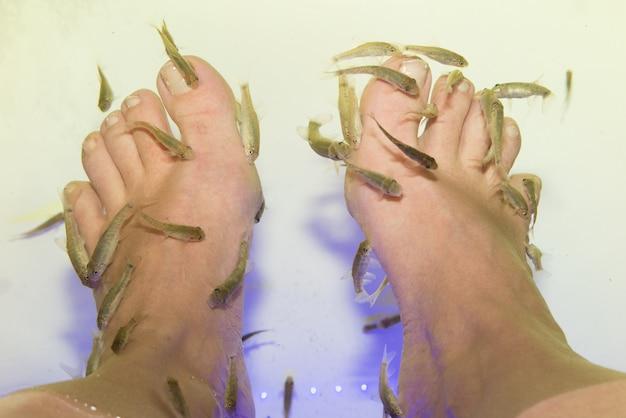 Tratamento de pedicure rufa garra spa de peixe