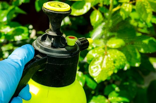 Tratamento de pesticidas de flores no jardim, árvores e plantas