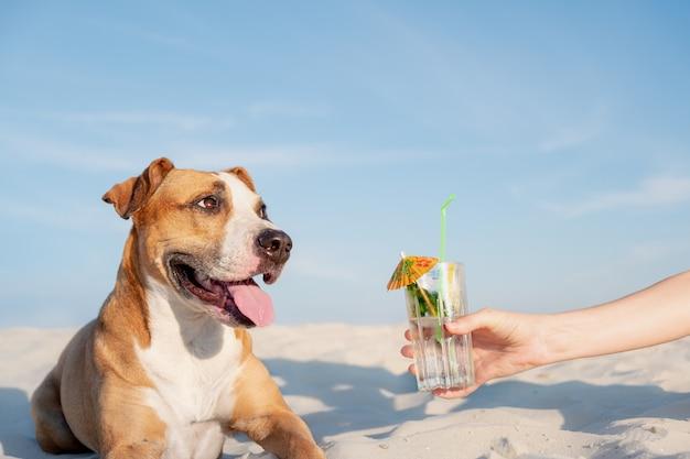 Tratar com um copo de bebida gelada na praia.