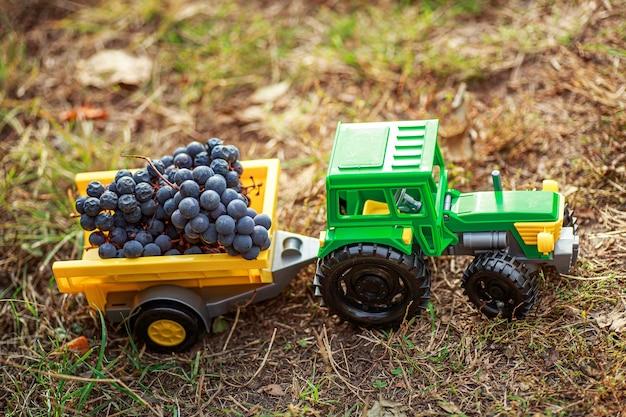 Trator de brinquedo verde com reboque carrega uvas maduras pretas. conceito de colheita