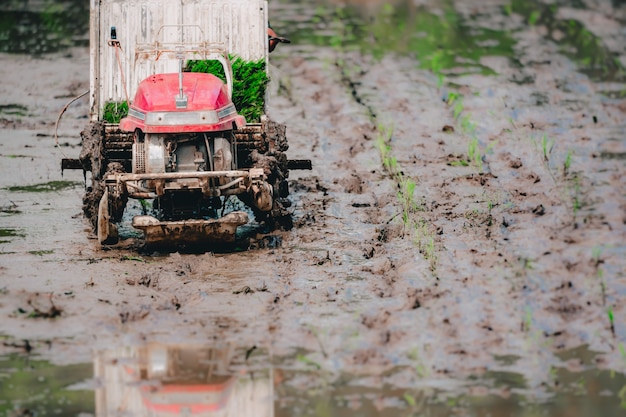 Trator de plantio de arroz e fazendeiro trabalhando no campo de arroz para preparar terras agrícolas orgânicas