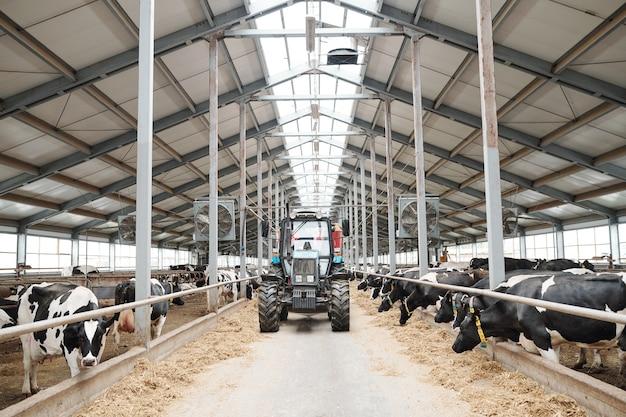 Trator movendo-se ao longo do corredor entre dois longos estábulos dentro de uma grande fazenda leiteira contemporânea