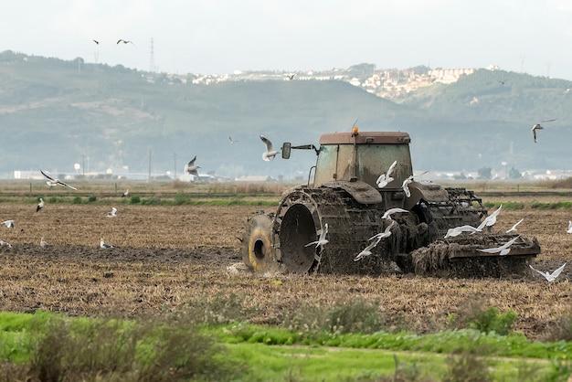 Trator que ara o campo de arroz entre pássaros