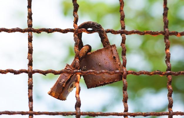 Trava em uma cerca metálica