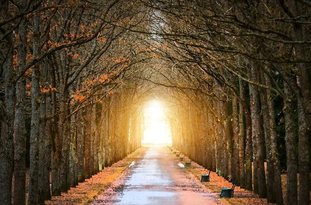 Tree oaks túnel em torno da escuridão, e a luz no fim da mola do túnel e da estrada.
