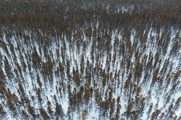 Treed cobrindo terreno coberto de neve