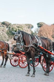 Treinador de cavalos tradicional fiaker em viena, áustria