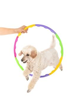 Treinamento de agilidade