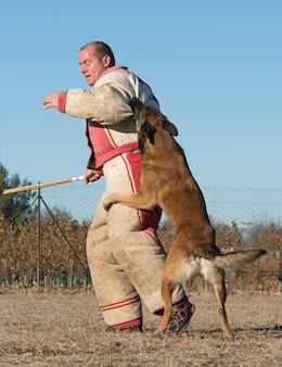 Treinamento de cachorro policial