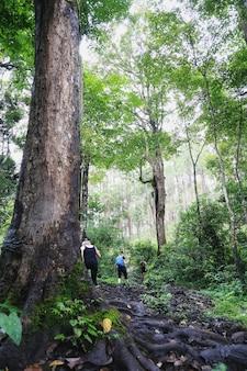 Trekking casal na floresta