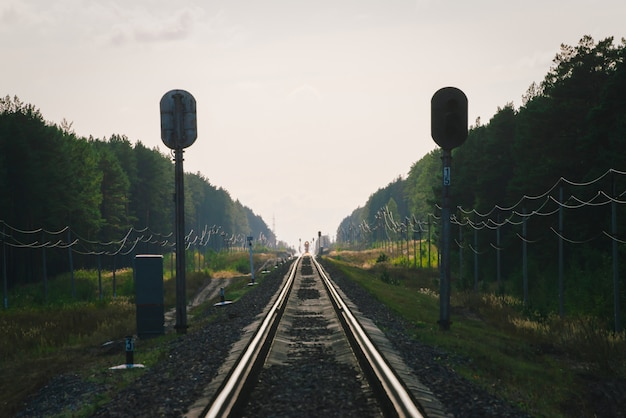 Trem místico viaja de trem pela floresta