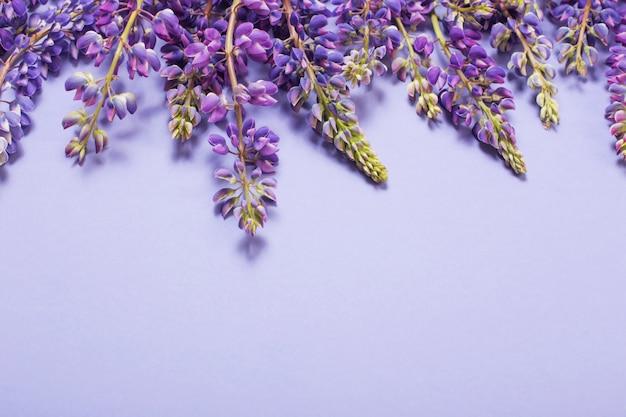 Tremoço flores em papel violeta