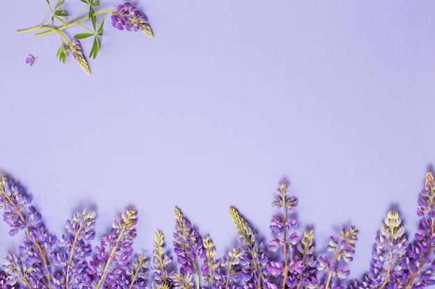 Tremoço flores na superfície de papel violeta