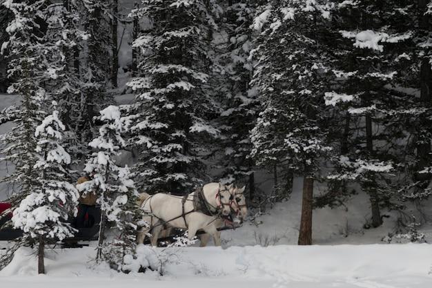 Trenó puxado a cavalo, lago louise, parque nacional banff, alberta, canadá