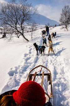 Trenós puxados por cães nas ilhas lofoten, norte da noruega.