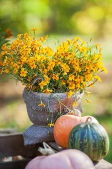 Trepadeira de flor de laranjeira e pumkins