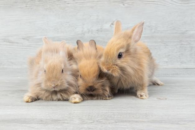 Três, adorável, bebê, marrom, coelhos