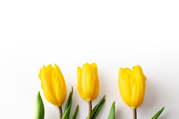 Três botões de tulipas amarelas encontram-se na parte inferior exatamente sobre um fundo branco. vista superior. fechar-se. copiar spase