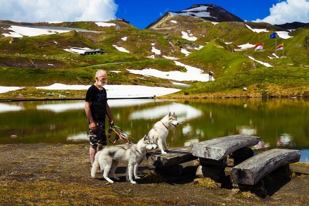 Três cachorros estão sentados. um bando de husky siberiano.