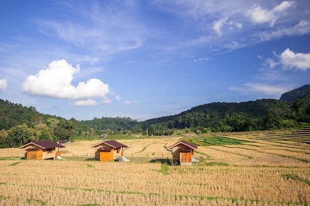 Três casas no meio de campos de arroz