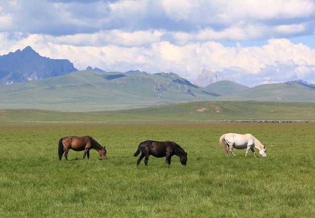 Três, cavalos, comer, capim, ligado, a, verde, pasto, campo, montanha, paisagem, nublado, dia