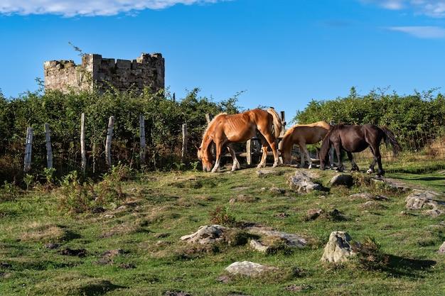 Três cavalos estão pastando