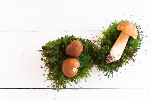 Três cogumelos brancos em musgo no contexto de uma mesa de madeira branca. vista do topo.