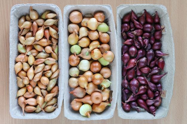 Três conjuntos de sementes de cebola variadas em recipientes de plantio ecológicos