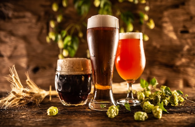 Três copos com cerveja à pressão escura e vermelha na frente de um barril de madeira. decoração de espigas de cevada e lúpulo fresco.