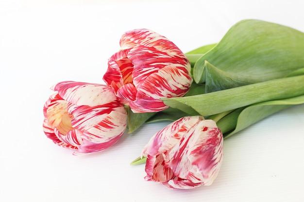 Três flores cor de rosa