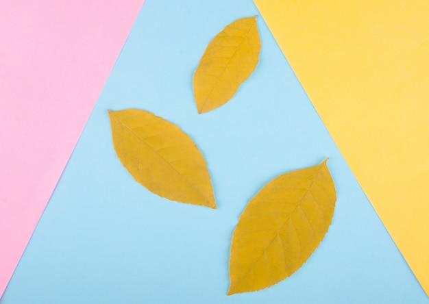 Três folhas de outono amarelas sobre um fundo de papel multicolorido, conceito mínimo (configuração plana, vista superior)